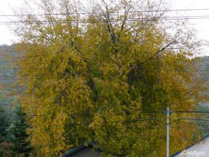 黄色くなった木