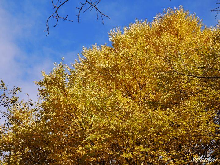 黄色がきれい