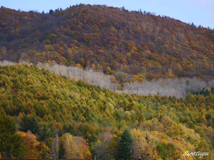 東丘の紅葉