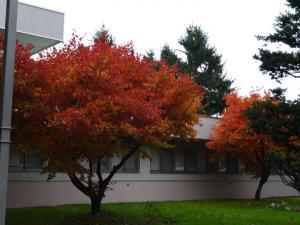 大学の紅葉1