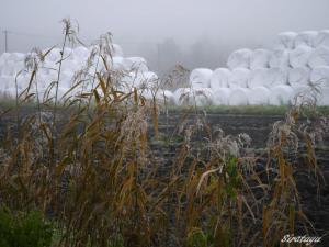霧と霜の朝