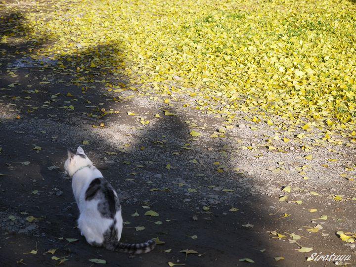 落ち葉と猫(ソウ)