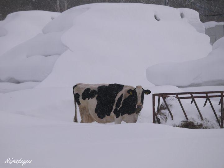 正月早々厳しい天気ねー