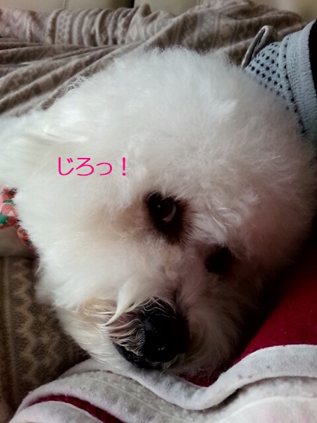20141124_113014679.jpg