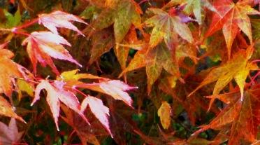 2012-11-10kouyou2.jpg