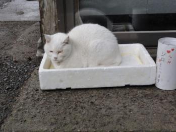 2012松島猫