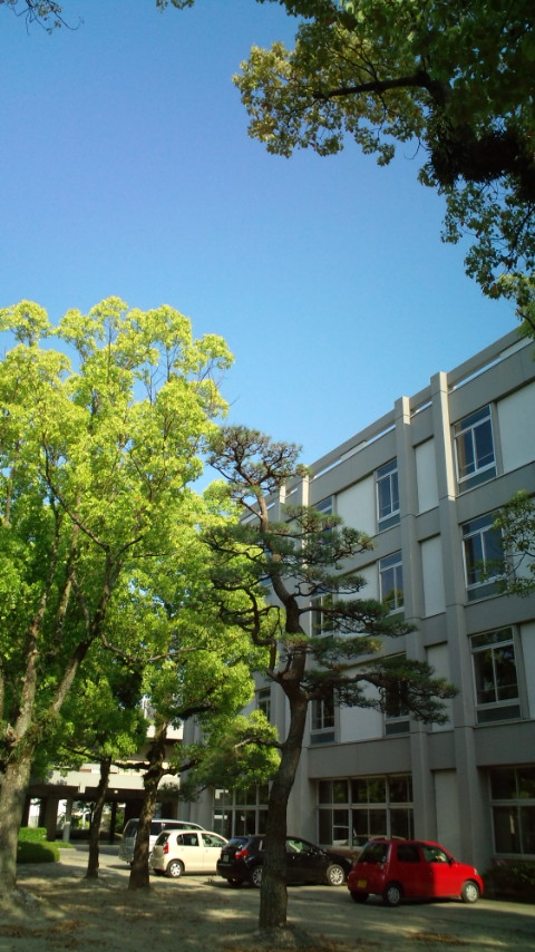 School garden May2012-03