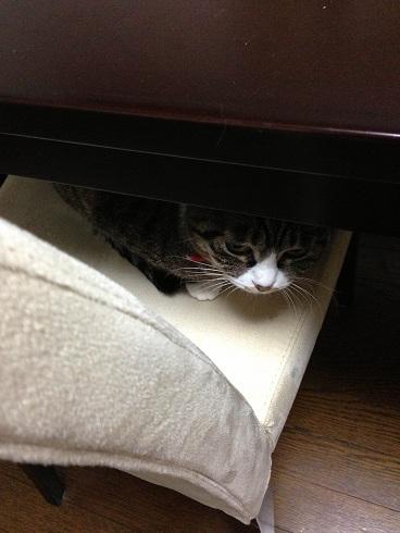 隠れてた1