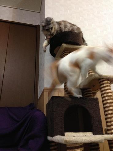 猫ぱーんち