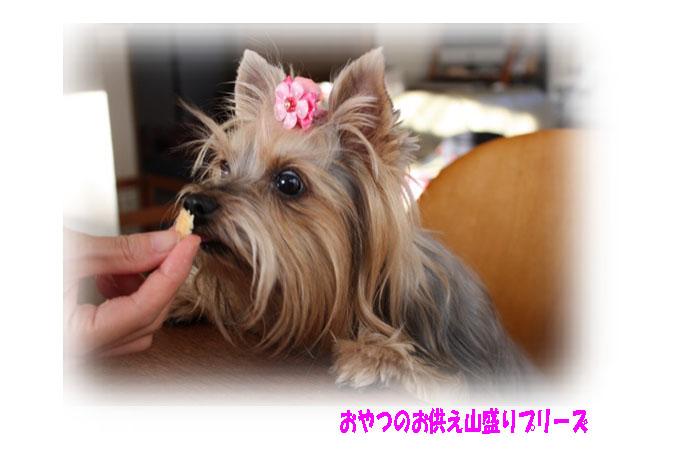 IMG_1477ab.jpg