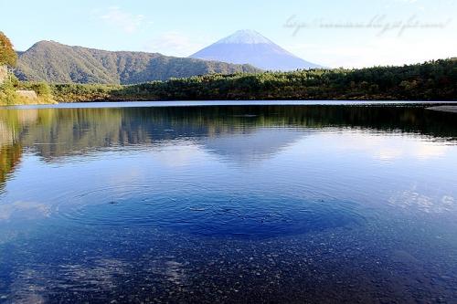 西湖の逆さ富士と鮒
