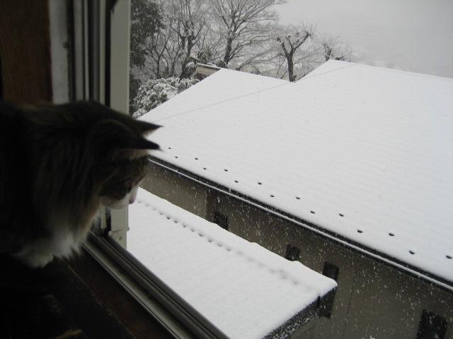 雪が降る 010