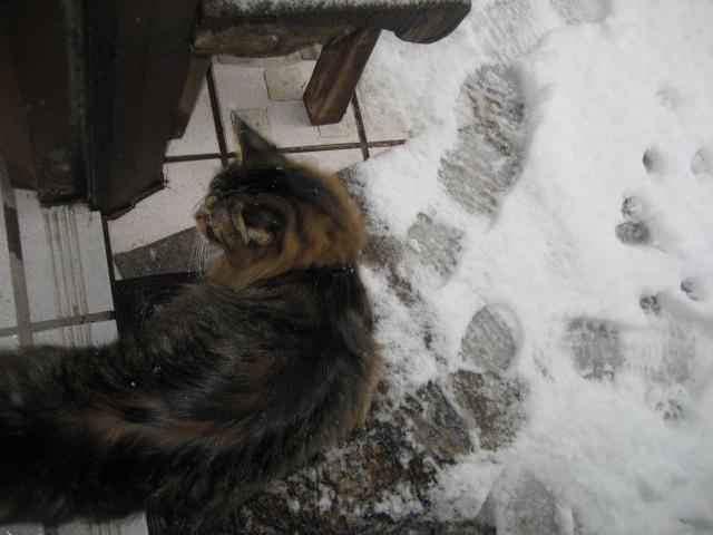 雪が降る 016