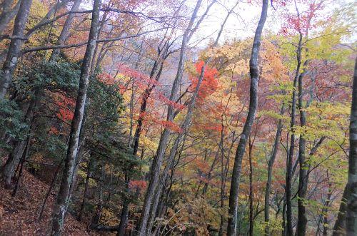 登り道の紅葉