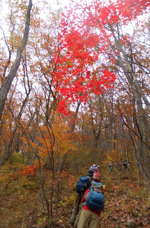 紅葉の斜面