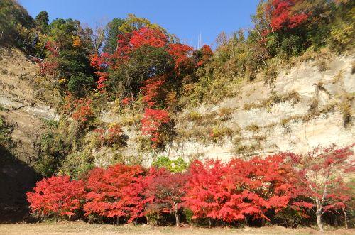 梅ヶ瀬渓谷の紅葉1