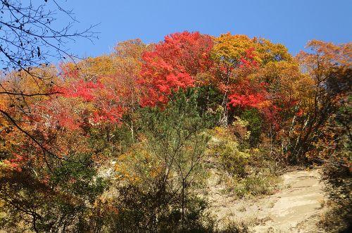 梅ヶ瀬渓谷の紅葉2