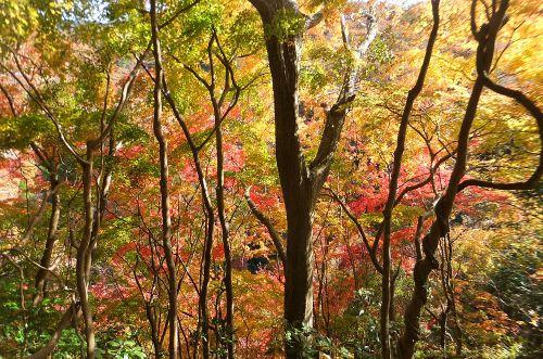 梅ヶ瀬渓谷の紅葉3