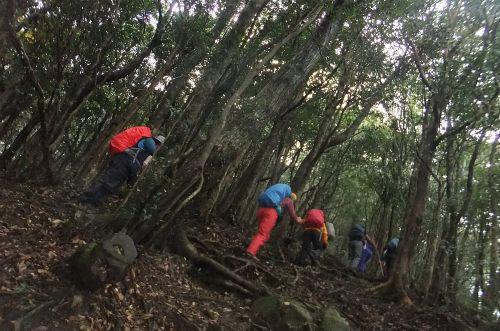 照葉樹林を登る