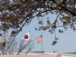 日米桜祭り0409