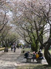 桜祭り0409d