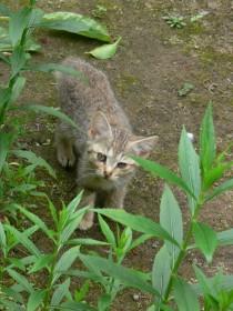 子猫0701a