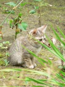 子猫0701b
