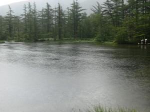 明神池一の池0715a