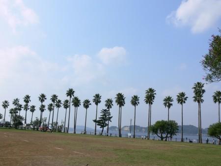 椰子の木1021ta