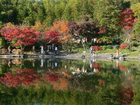 紅葉日本庭園1125tc