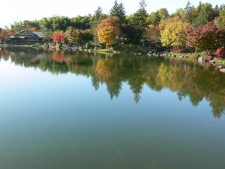 池とモミジ1125ta