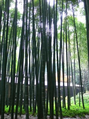 竹の庭1216ta