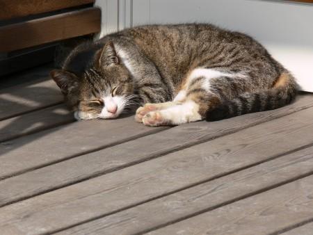 眠り猫1223ta
