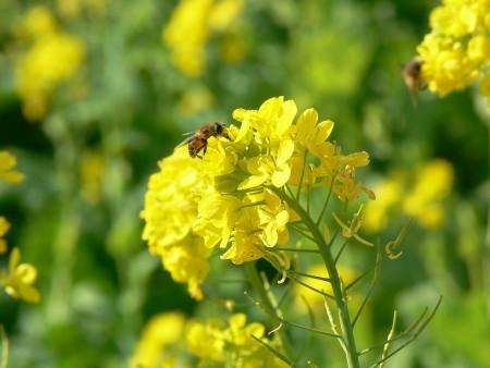 ミツバチ1230ta