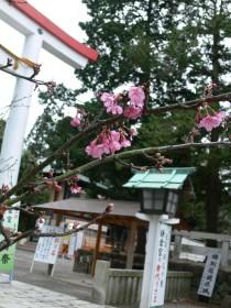 鎌倉宮0121a