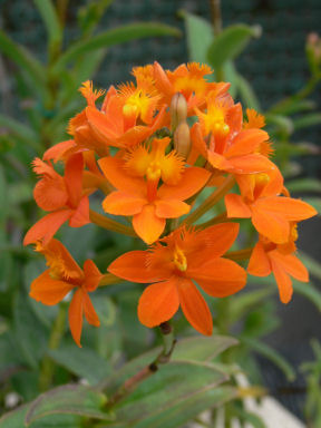 オレンジロイヤル0224ta