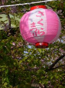 三浦桜まつり0303a