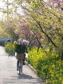 自転車の花0303a