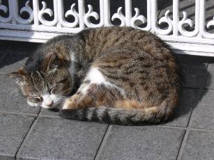 猫0310a