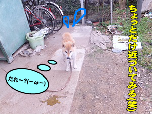 201212132.png