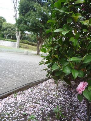 sakuraowariP1020991_convert_20120420201631.jpg