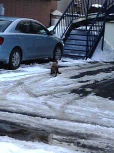 たくましい冬の猫w