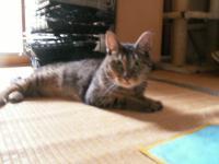 2010_1124_200349-PICT0057.jpg
