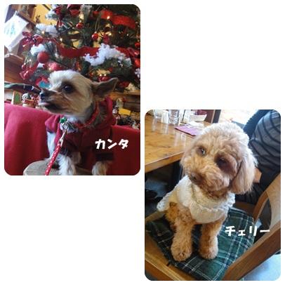 2013-11-105.jpg