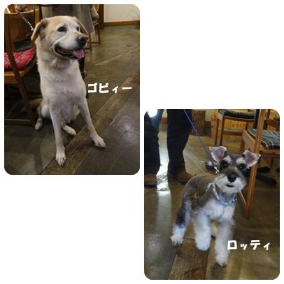 2013-11-108.jpg