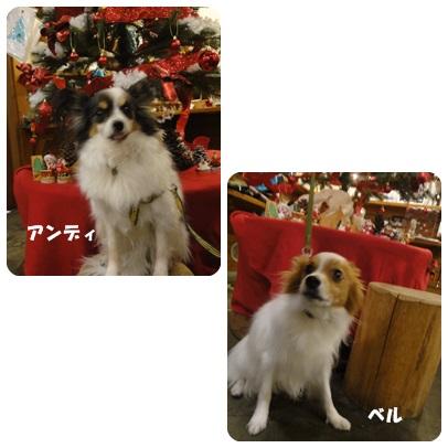 2013-11-113.jpg