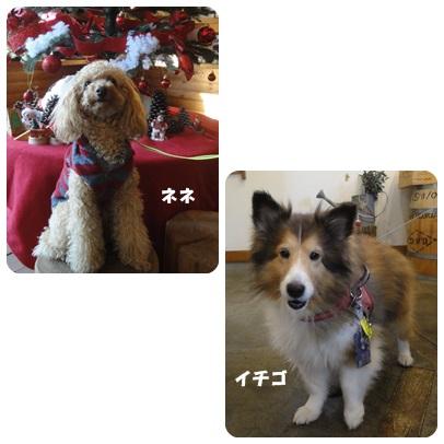 2013-11-114.jpg