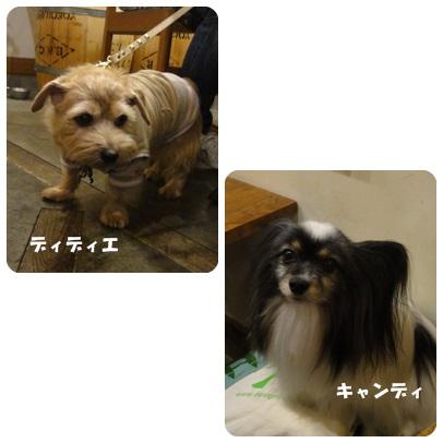 2013-11-117.jpg