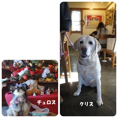 2013-11-119.jpg
