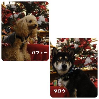 2013-11-126.jpg